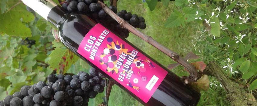 Vin de Montmartre : bio et sans sulfites grâce aux biotech