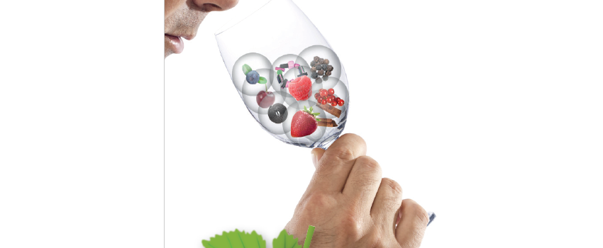 Wine bacteria and the Art of Mastering sensory potential