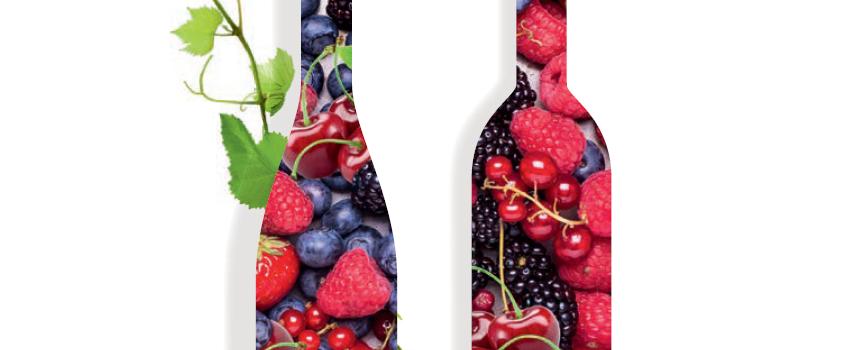 Optimisation des sulfites : un nouvel outil pour les vins rosés et rouges
