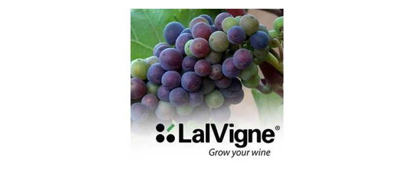 Viticulture : un produit naturel pour améliorer la qualité des raisins