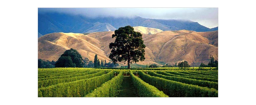 Wine making guideline : New Zealand Sauvignon Blanc