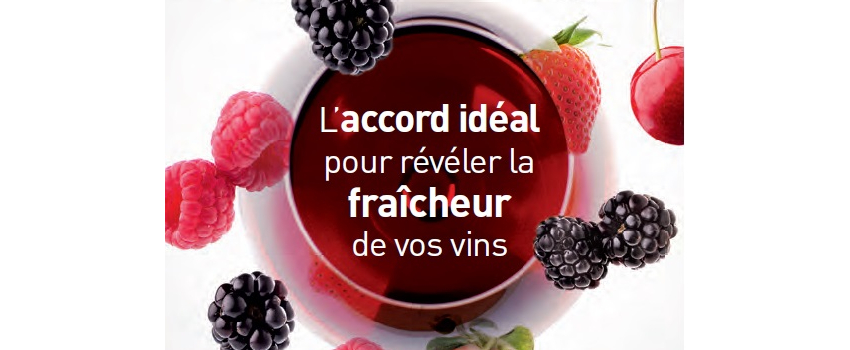 Vinification en rouge : élaborer des vins ronds, frais et fruités