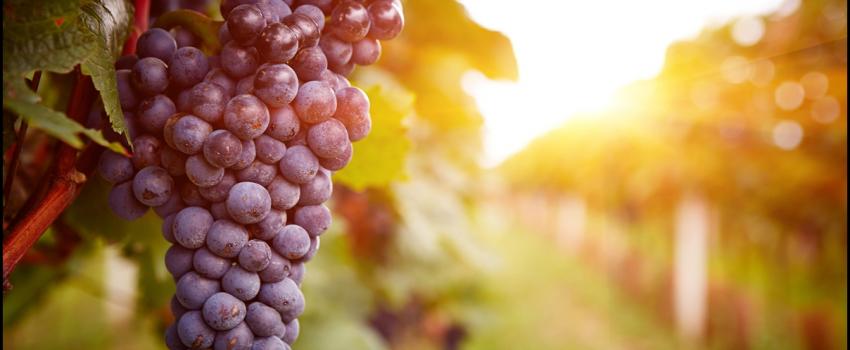 Gestion naturelle de l'acidité et de l'alcool dans les vendanges de haute maturité