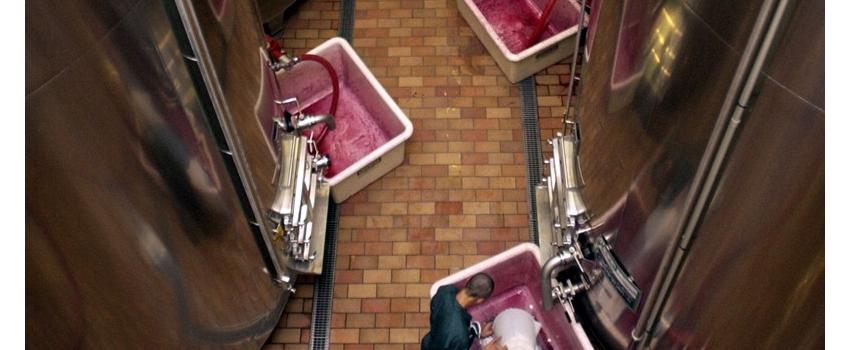 Des outils biotechnologiques pour réduire les sulfites en vinification
