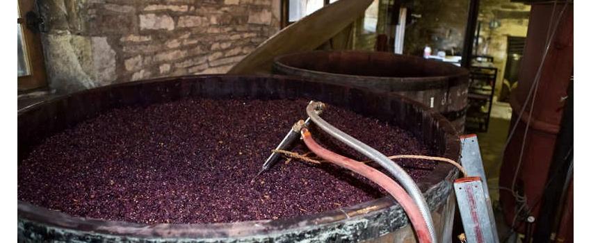 La température, un rôle essentiel dans les vinifications