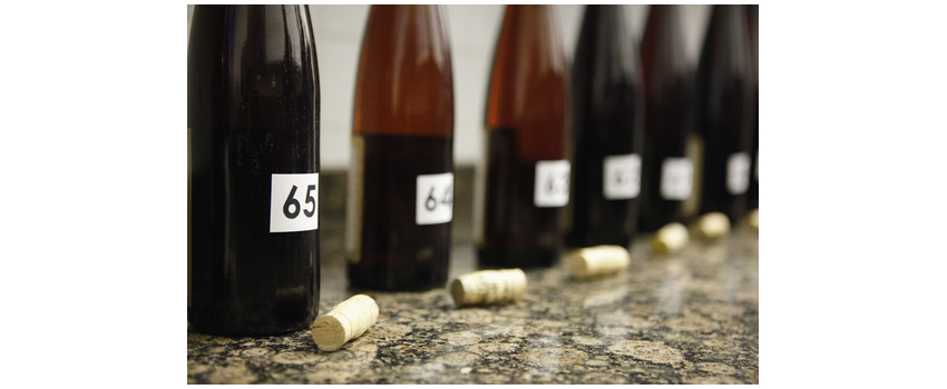 Impact of selected wine bacteria on the sensory profile of wines  .