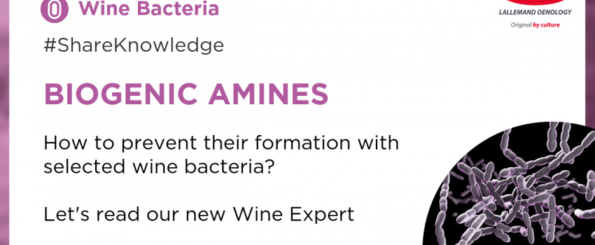How to control the formation of Biogenic Amines with selected wine bacteria?
