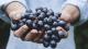 Millésime 2020 : les vignerons optimistes