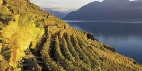Macrowine 2016 : Macromolecules and Secondary Metabolites of Grapevine and Wine