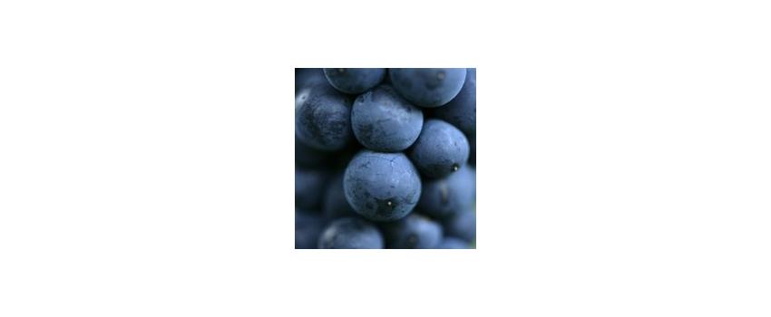 Lifting the Lid on Fermentation: A Masterclass in wine fermentation