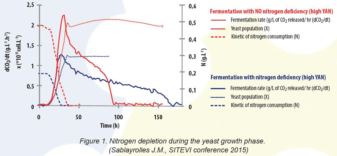 rate of fermentation